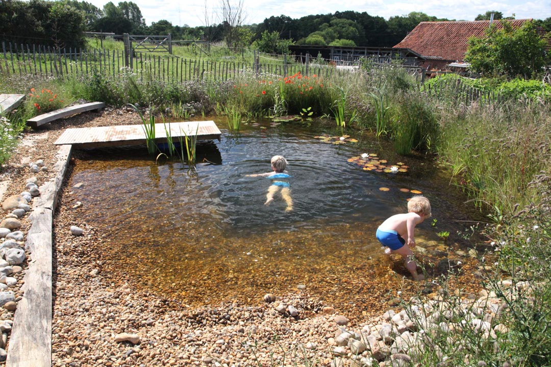 Organic plunge pool for Pond swimming pool